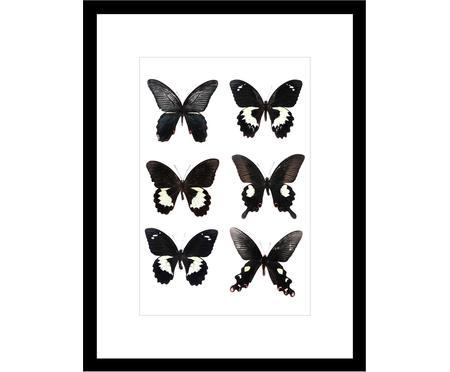 Zarámovaný digitální tisk Butterflies Dark